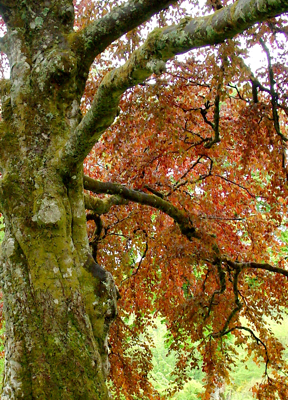 poetry   Tree Spirit H...